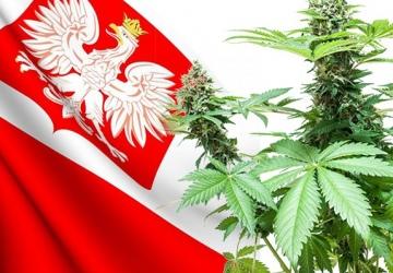 Legalizacja marihuany w Polsce
