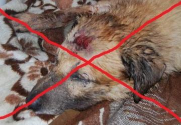 Petycja na Upublicznianie Danych/zdjęć Ludzi Krzywdzących zwierzęta