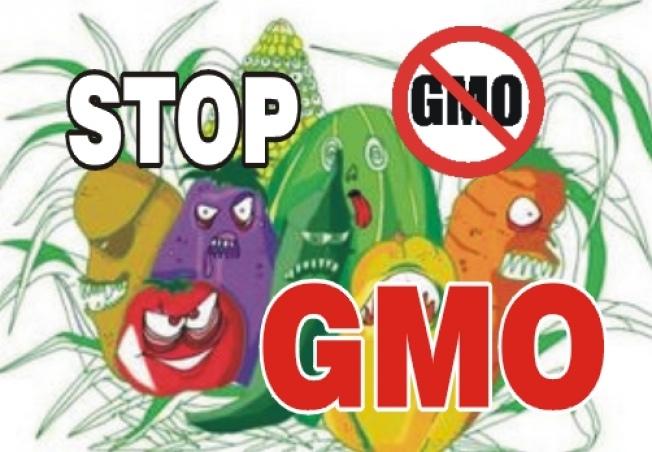 STOP GMO W POLSCE