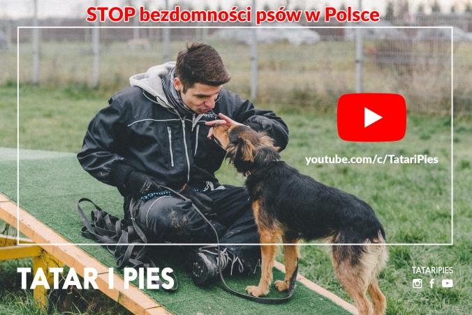 STOP bezdomności psów w Polsce